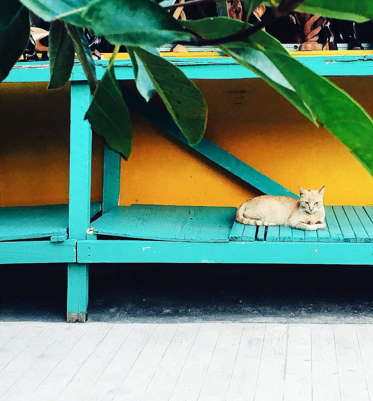 Travel: Placencia, Belize