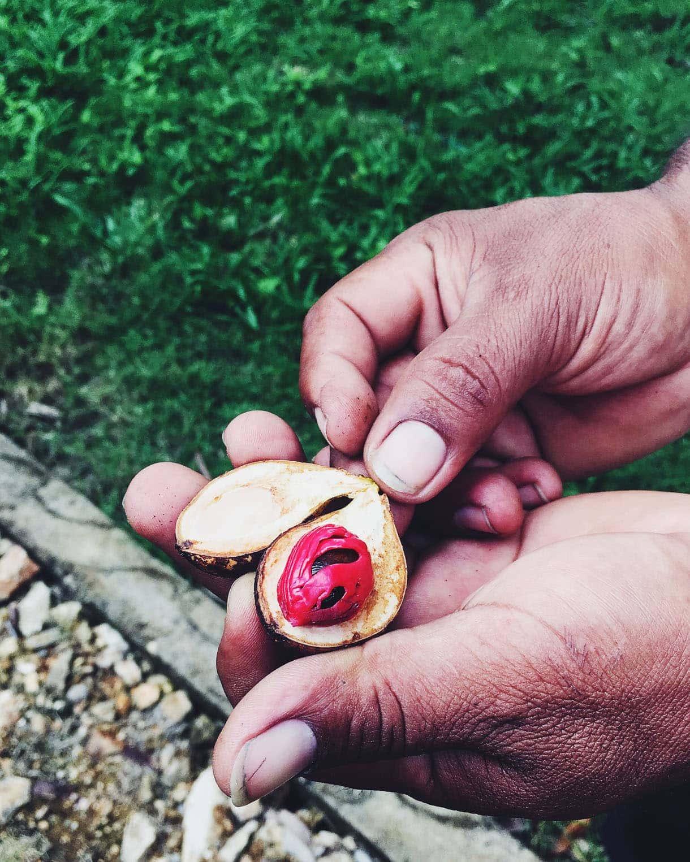 nutmeg grows on trees!