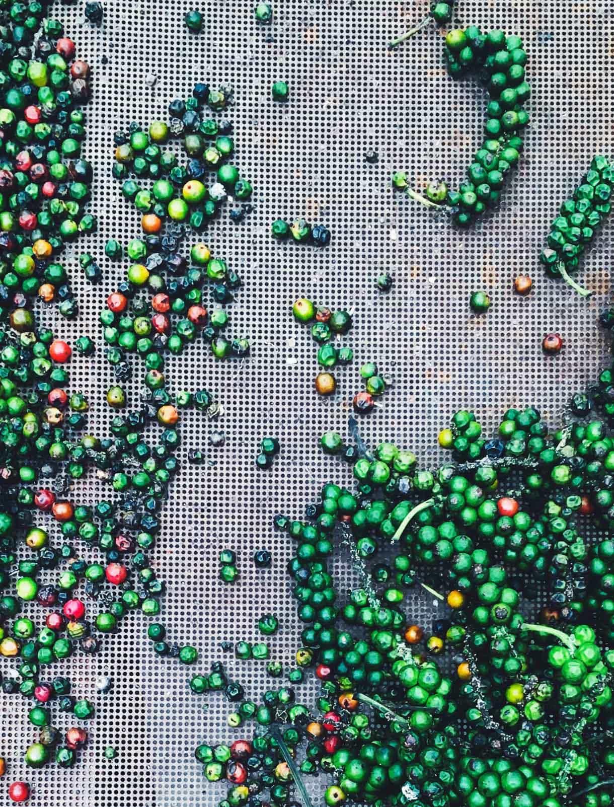 green peppercorns, drying