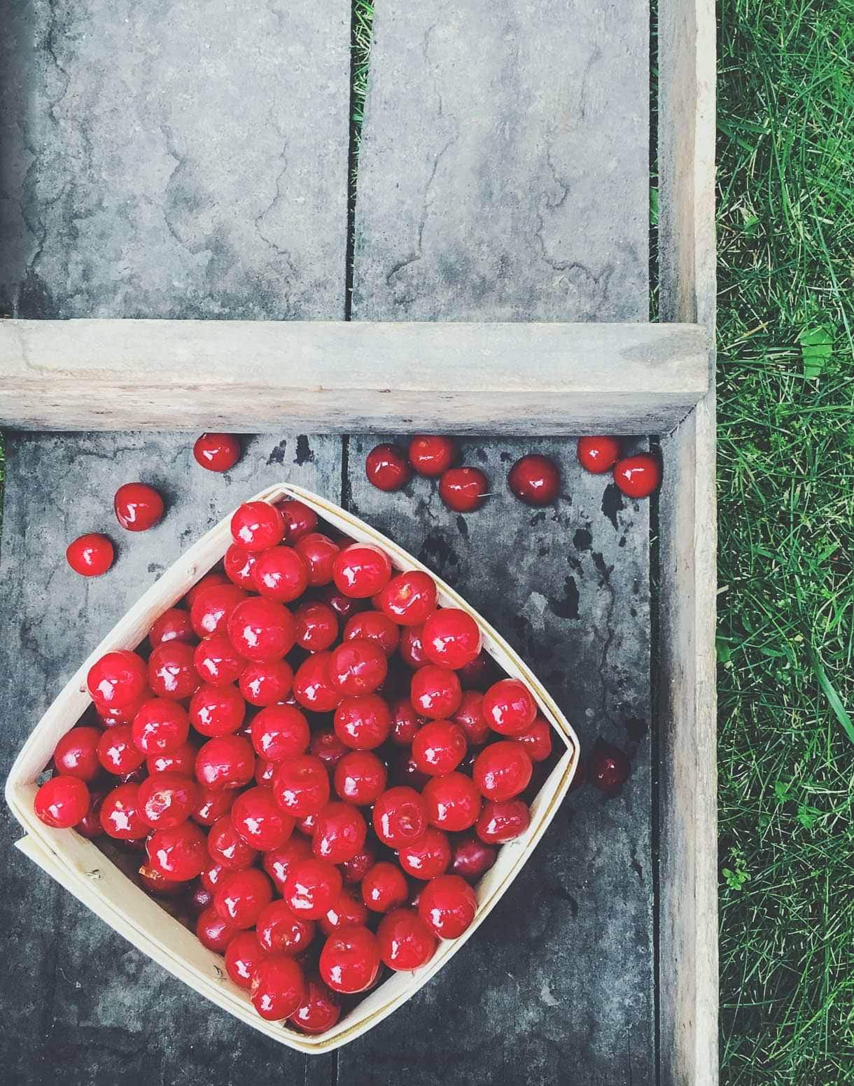 Tart Cherry Picking ~ Traverse City, Michigan