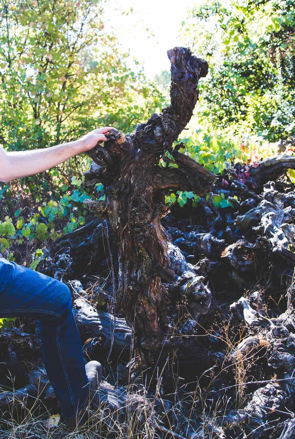 habitat preservation in LangeTwins vineyard