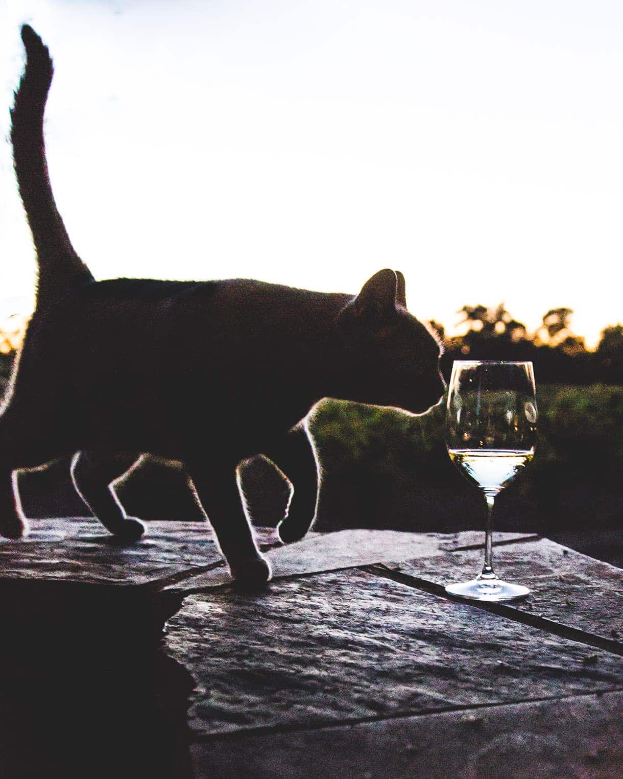 Cat and wine glass at sunset