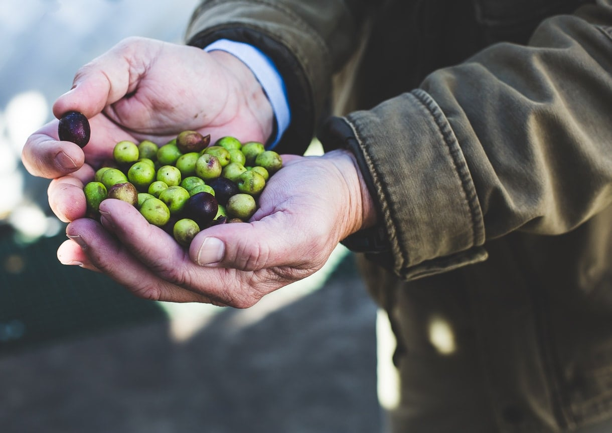 olive-12
