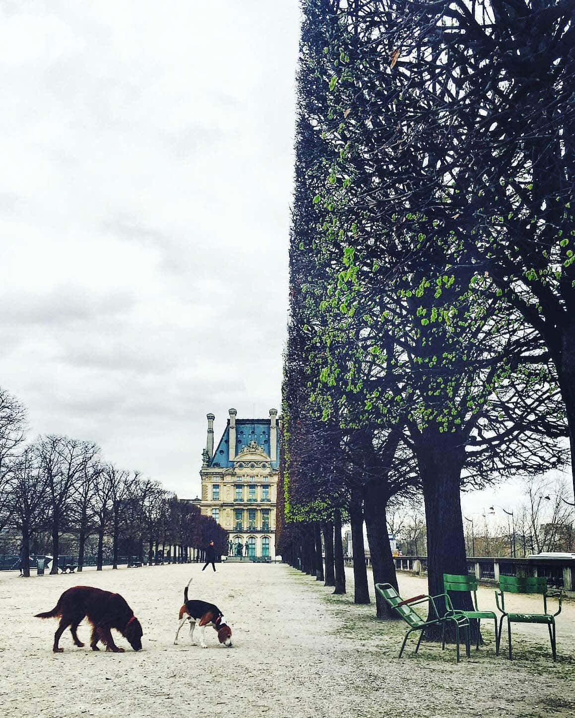 jardin des tuileries -- dogs in the garden