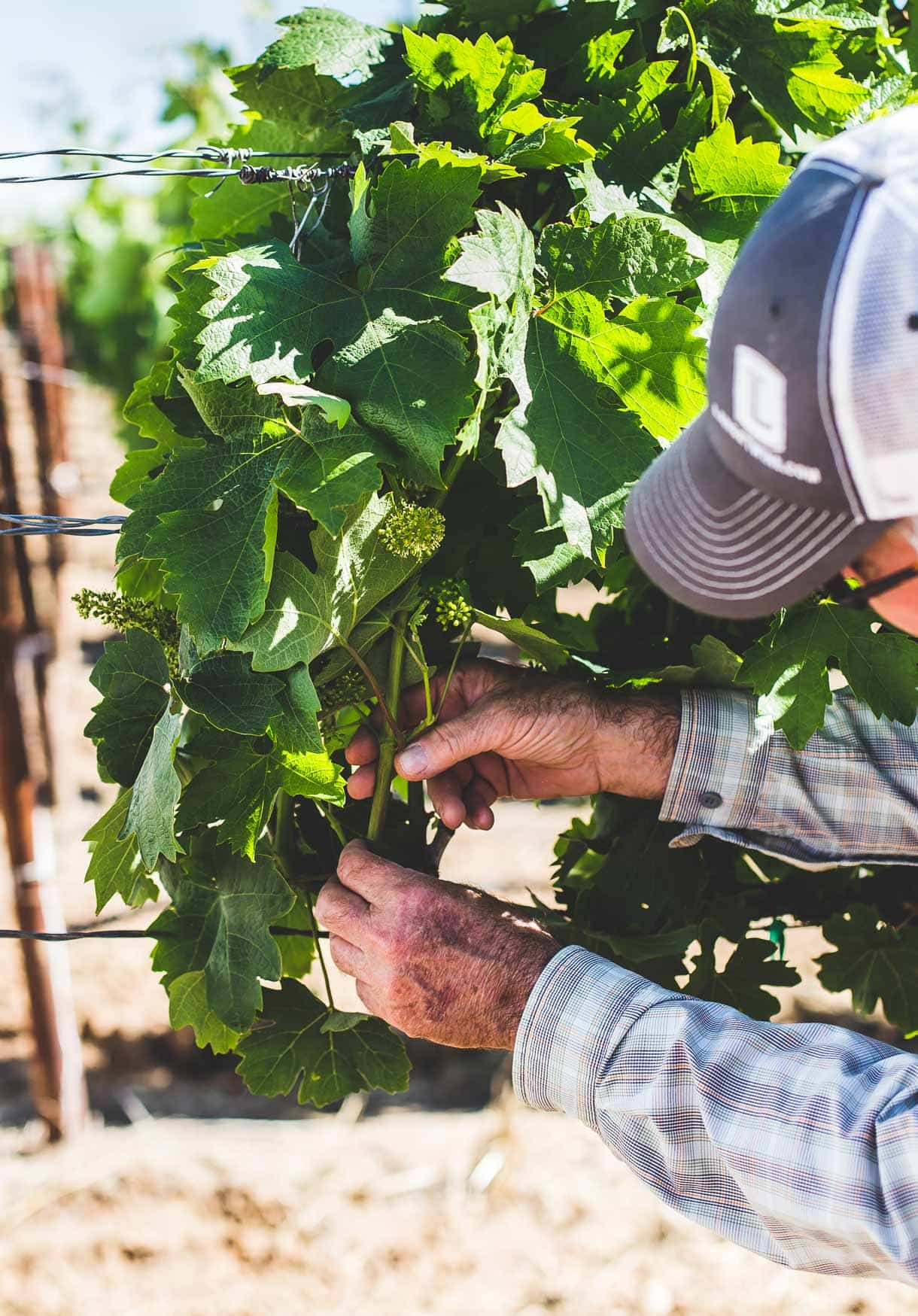 Lange Twins Winery - Lodi, California