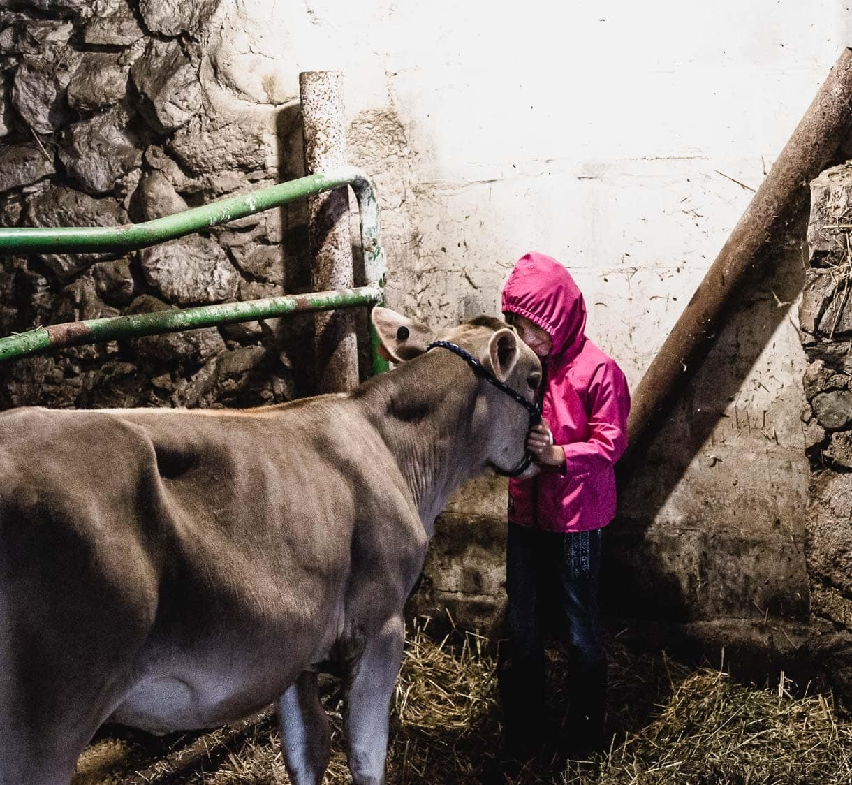 Young girl with her calf