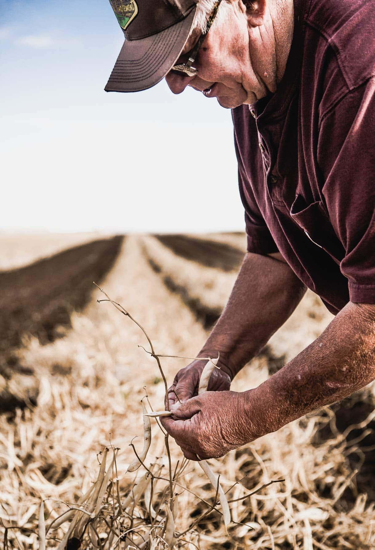 Bean Farmers // western Nebraska // dry beans