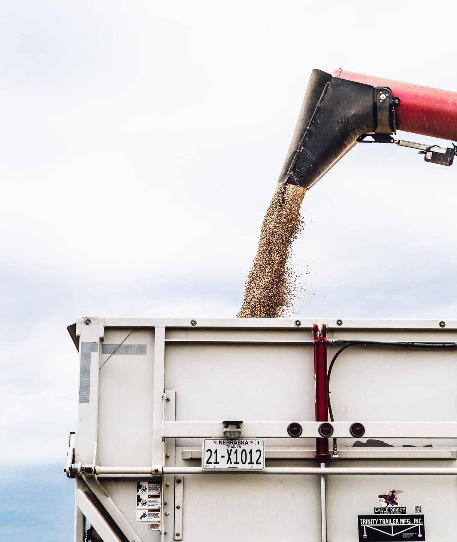 bean harvest, machine dumping beans into semi truck