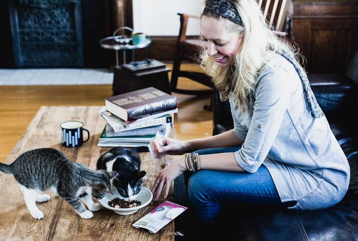 Introducing Resident Cats To New Cats: The Universal Language of Eating Together
