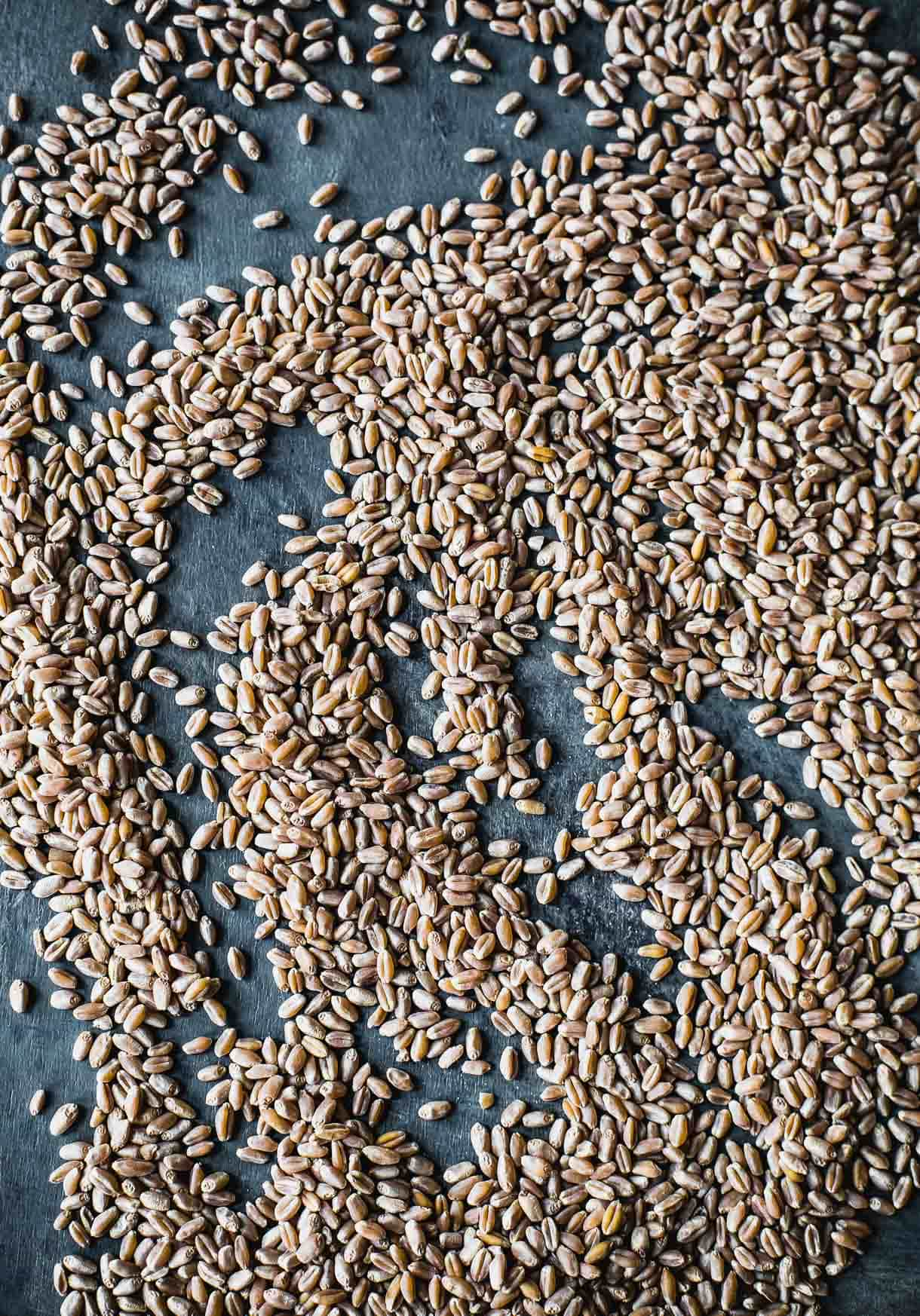 Hard Red Winter Wheat Grain